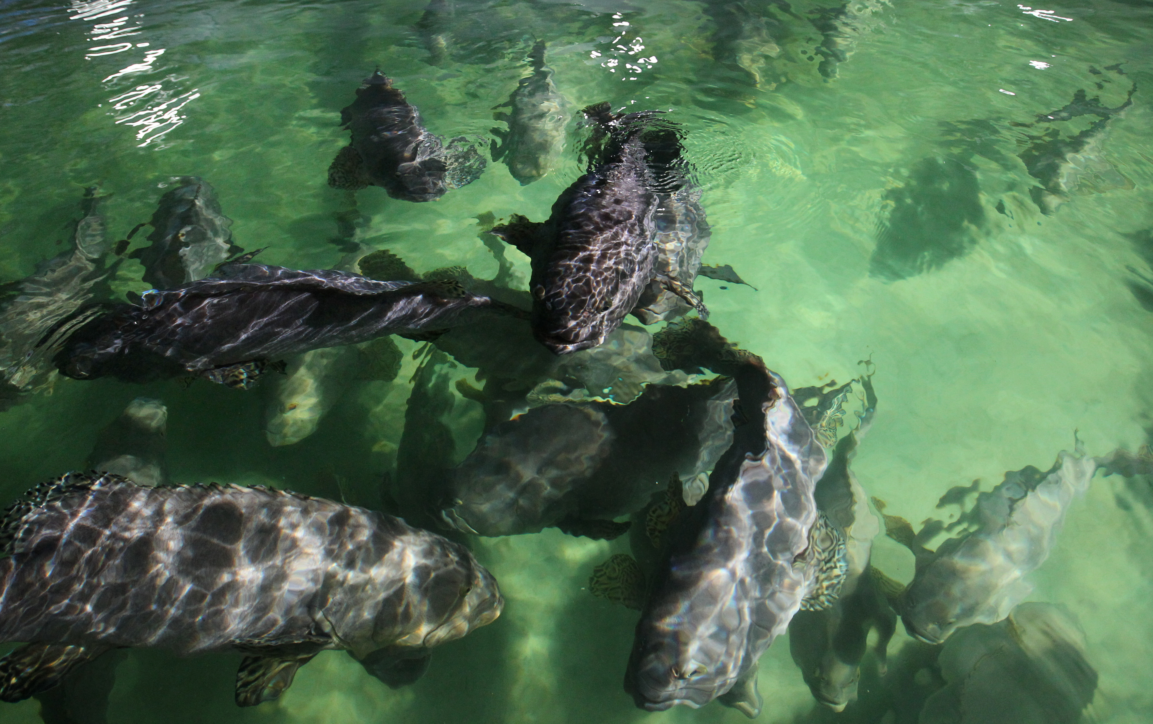 97af35d2f4d4 CityU links up with University of Stirling to modernise methods on aquatic  animal welfare