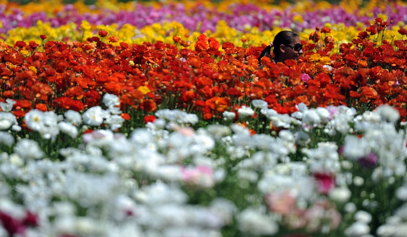 Chinas Budding Florists Are Heading To London To Earn Their Floral