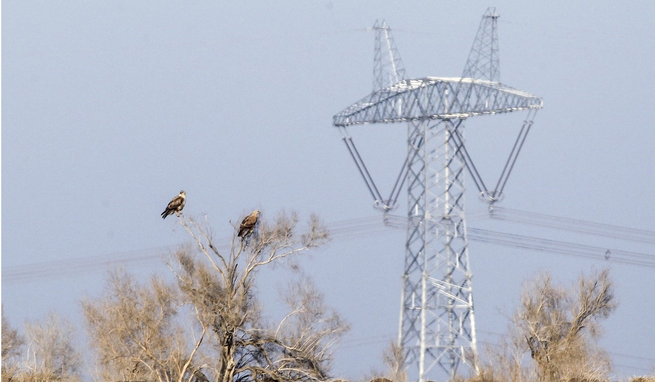 The heartbreaking search for a missing Russian falcon in