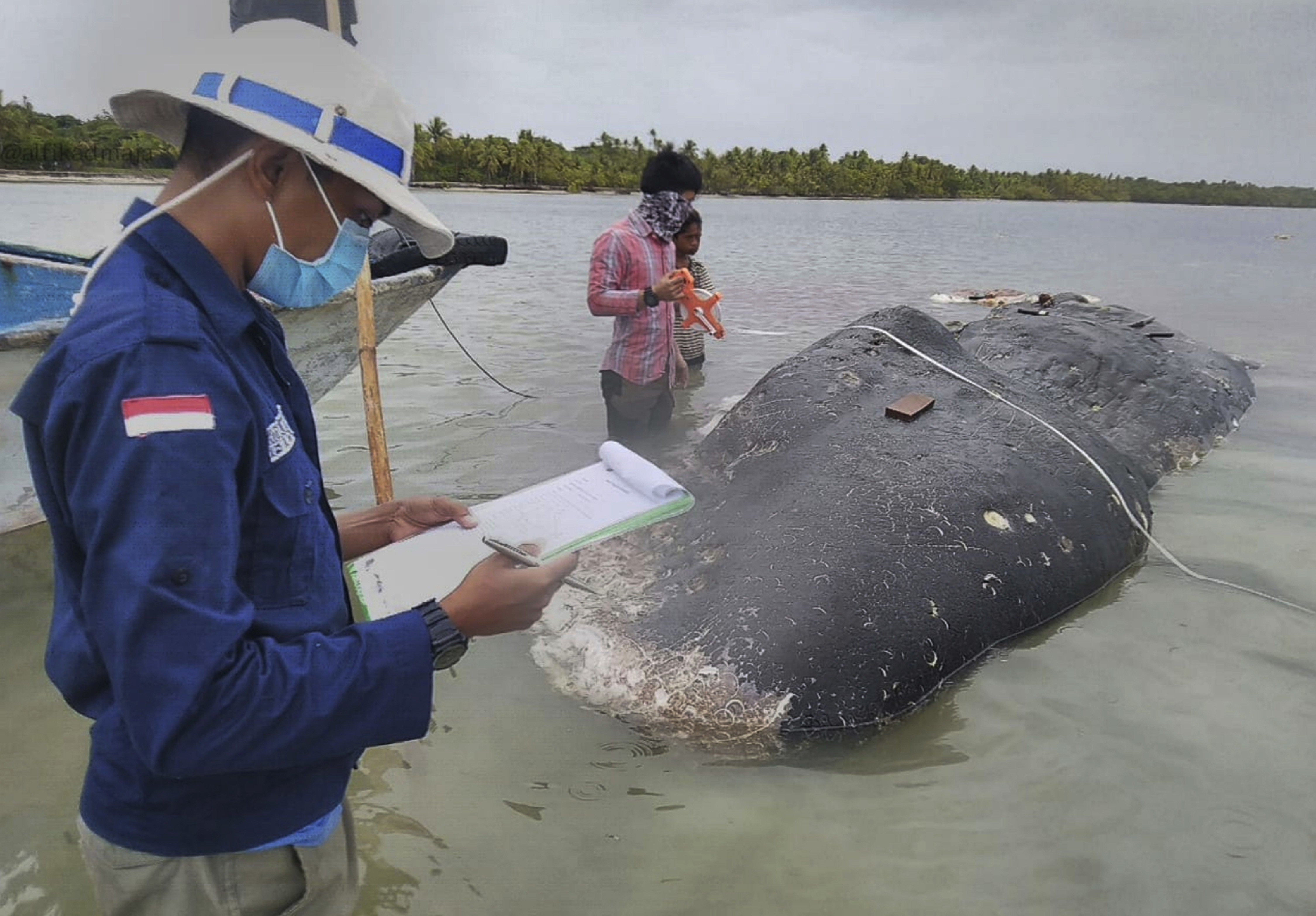 Dead whale washes ashore in Indonesia with 115 plastic cups
