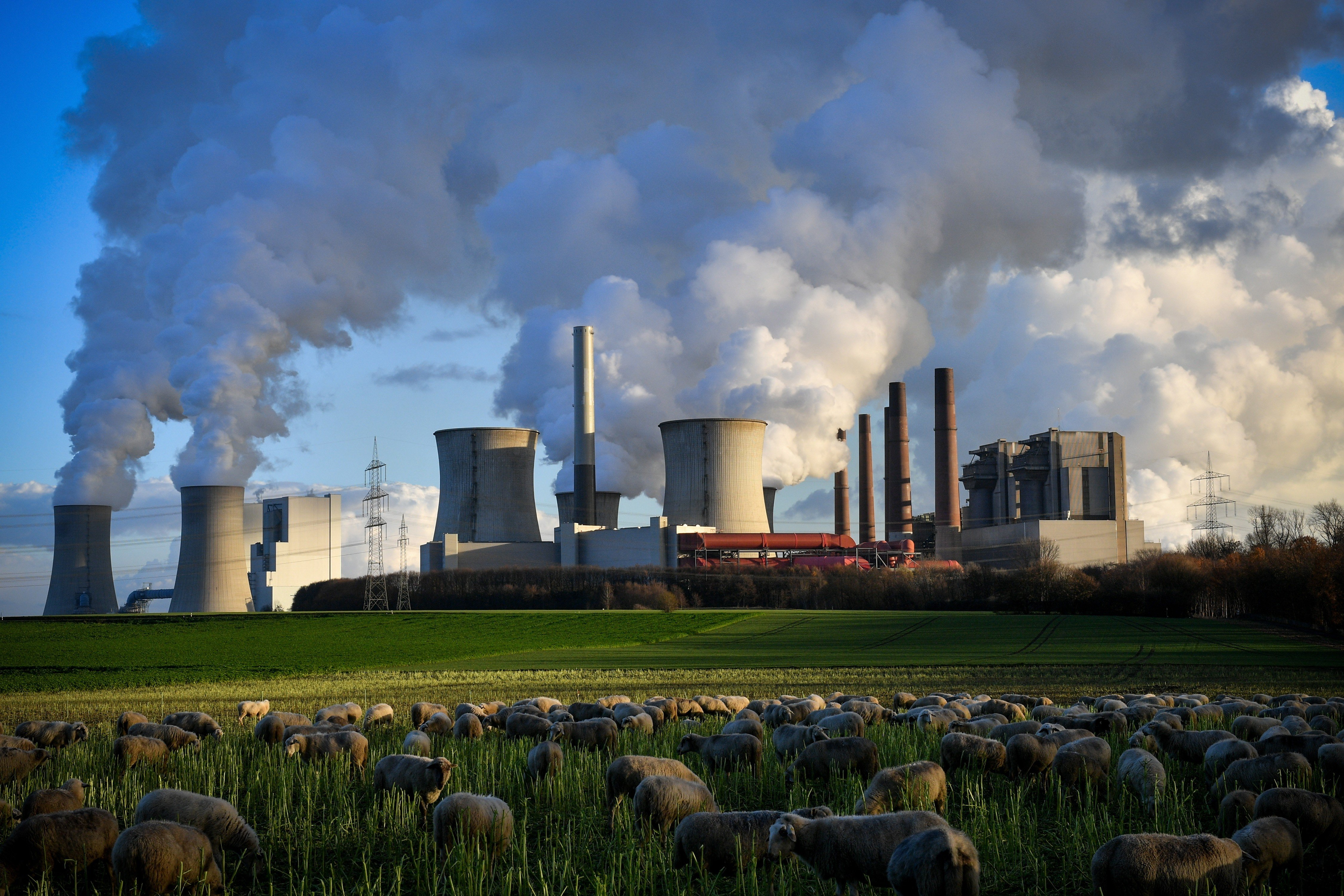 We are in trouble': Global carbon emissions reached a record high in
