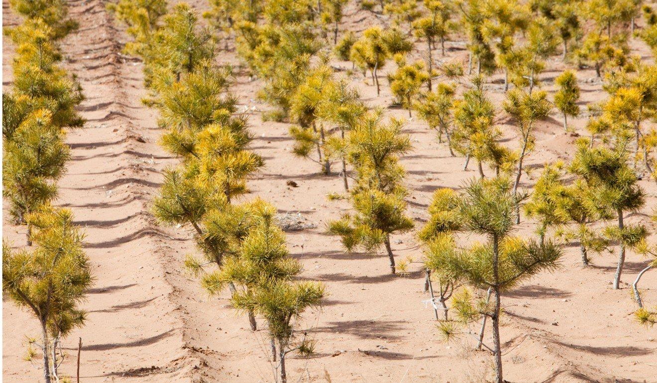 define afforestation in short