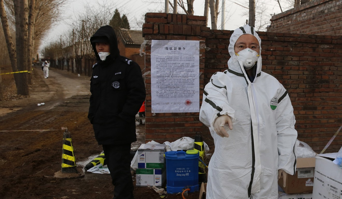 China's small pig farmers are being wiped out by deadly African swine fever