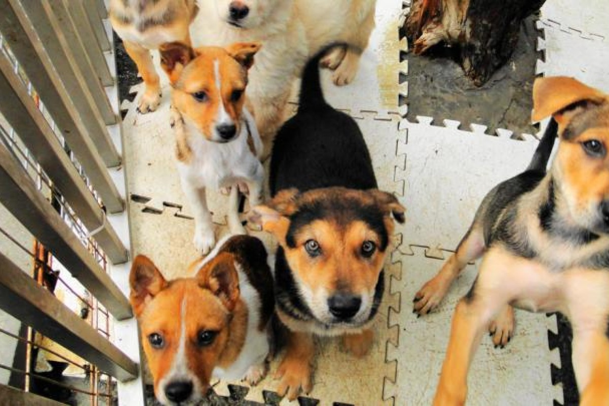 Illegal dog traders face crackdown | South China Morning Post