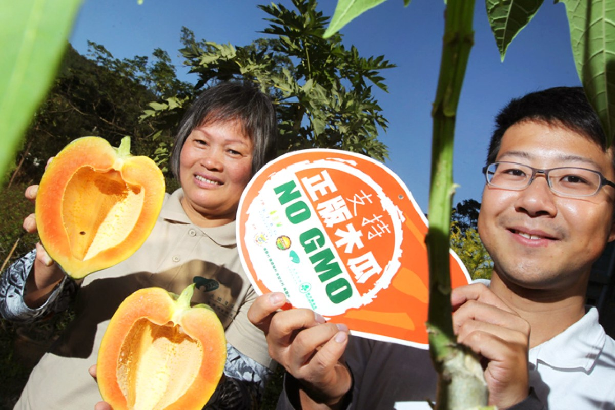 283bed55a Pilot scheme enlists farmers to root out GM papayas from Hong Kong ...