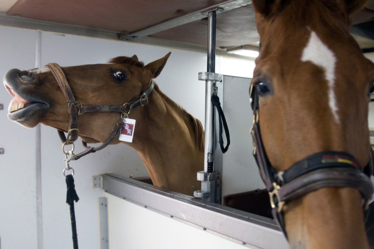 608ce313e Soft landing as 62 horses touch down in HK for showjumping showcase ...