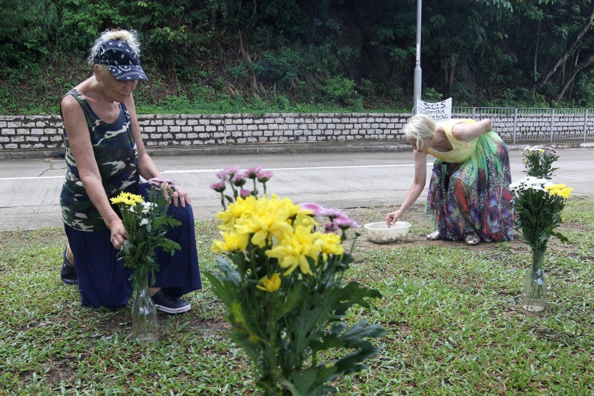 Flowers and fury for cattle killed on roads | South China