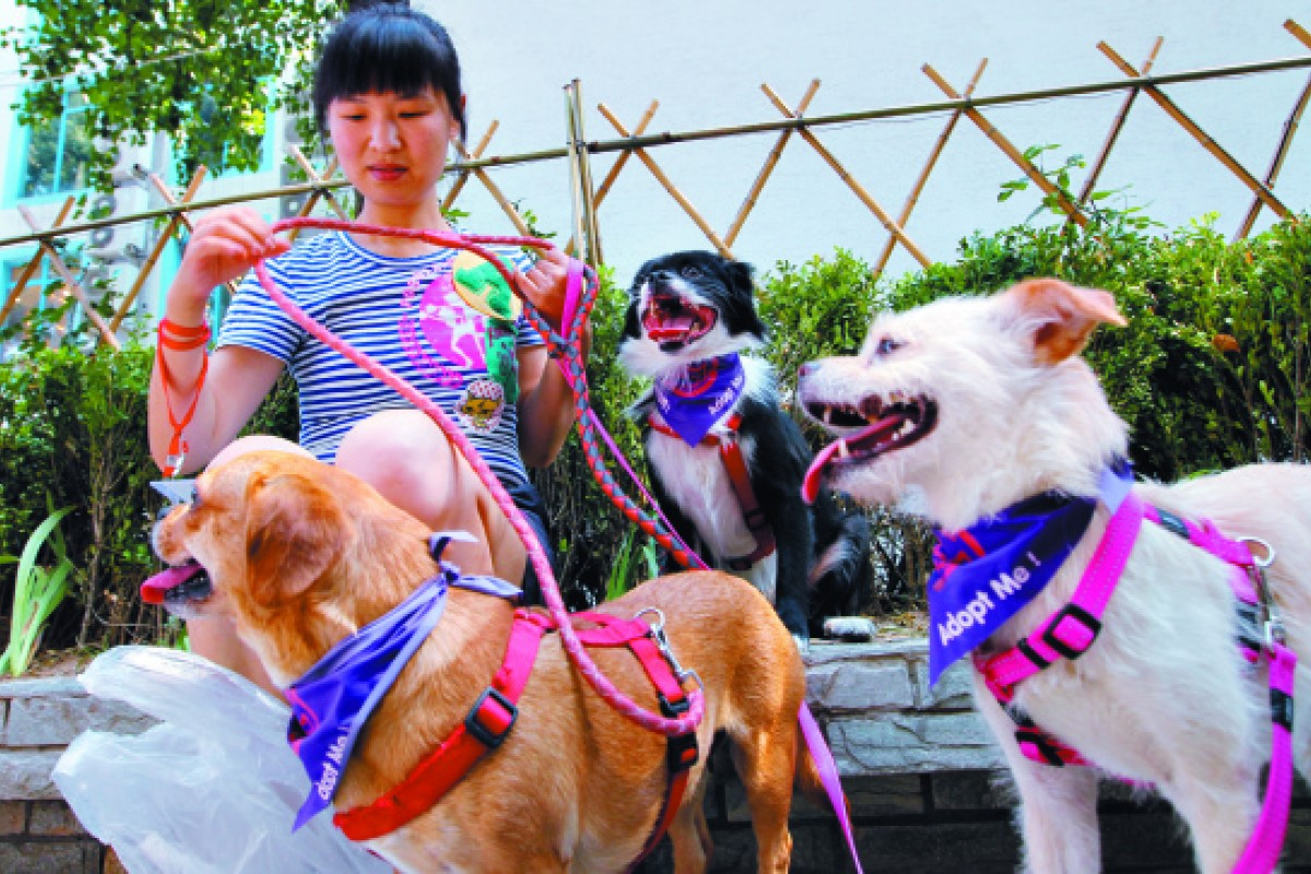 8bad2ff0c215 Friends in need: the struggle to save Beijing's stray cats and dogs | South  China Morning Post