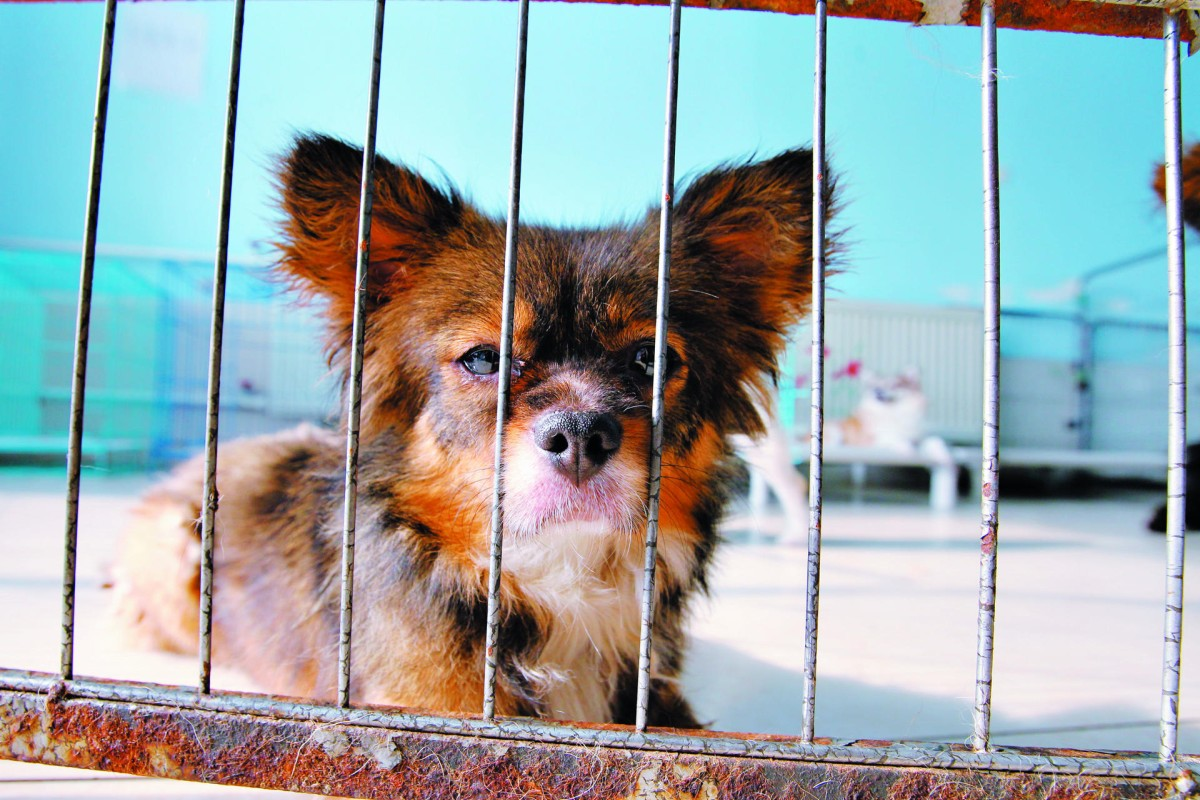 A Resident Of The Little Adoption An Animal Shelter In Shunyi Beijing
