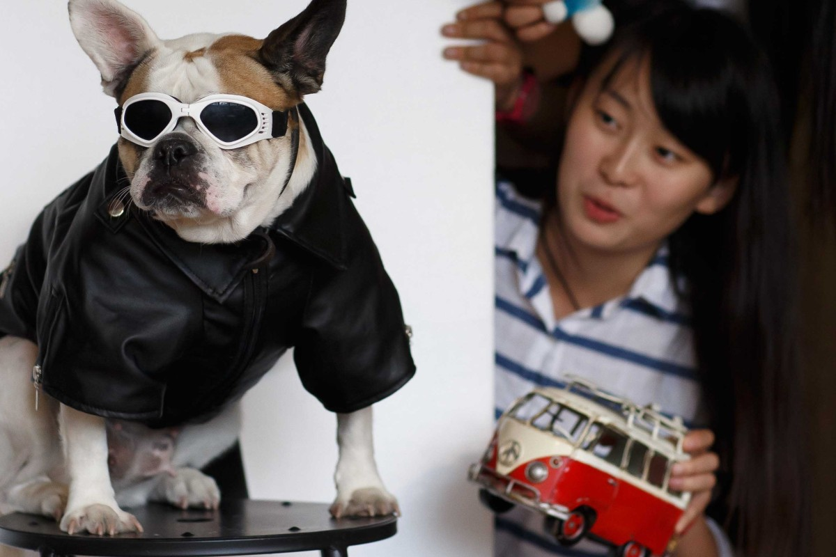 Survey of China's 100 million registered pets finds one in 13
