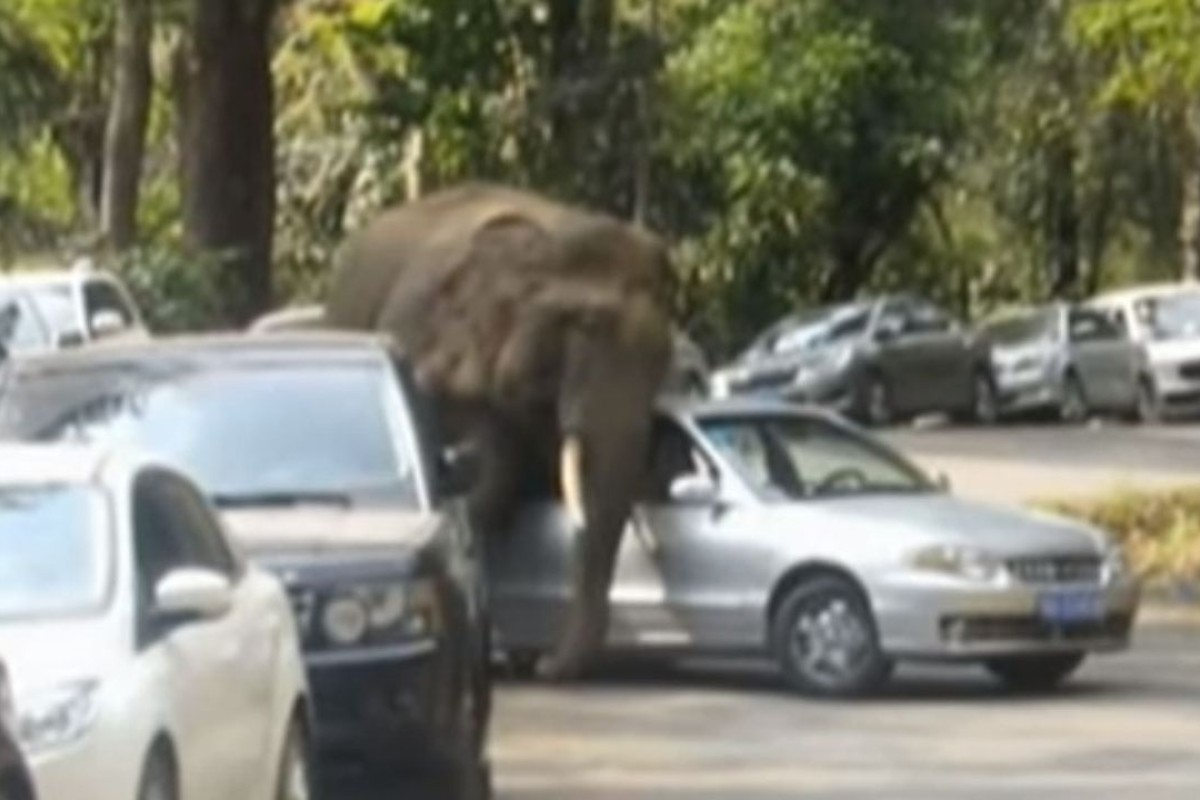 Jilted elephant goes on rampage again after his love dumped