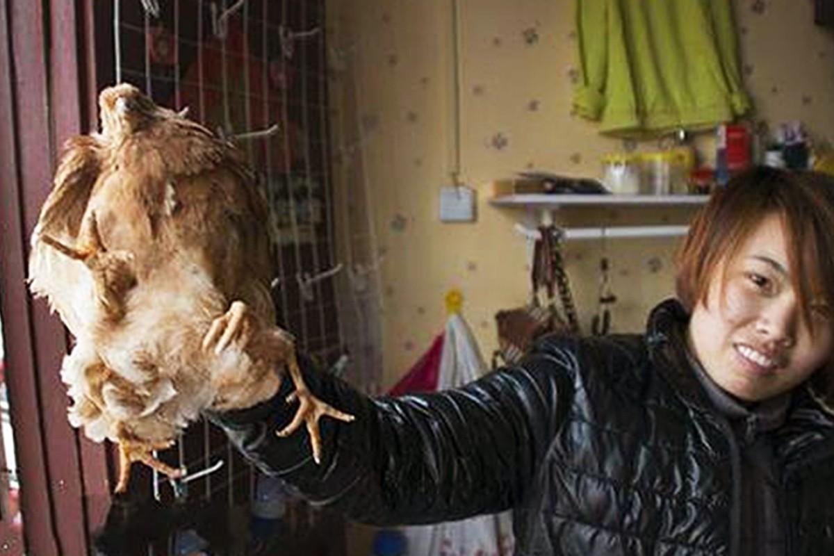 Four-legged chicken' found on farm in eastern China: it's still