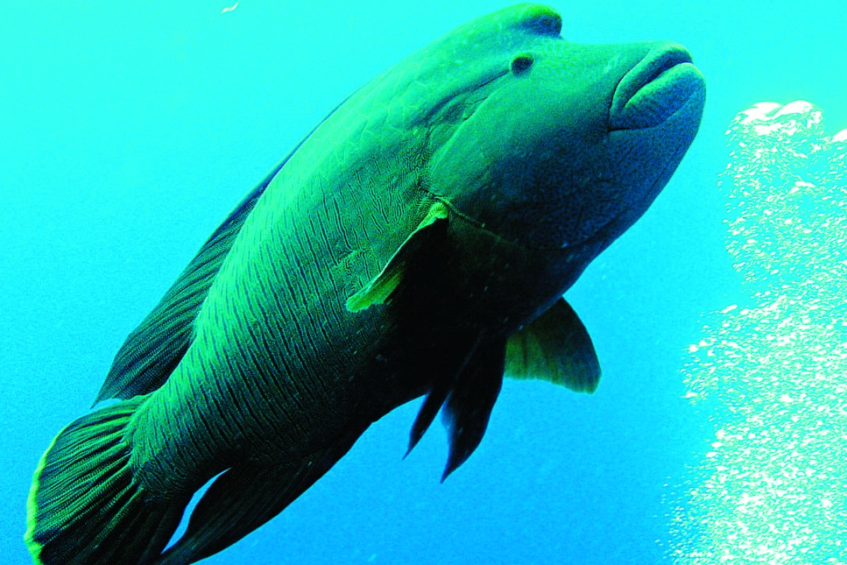 Trouble on the reef: the imperative for managing vulnerable and valuable fisheries