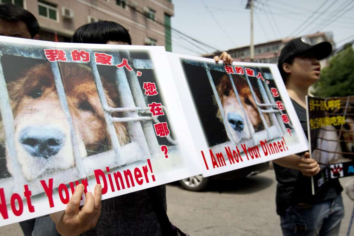 Yulin Dog Meat Festival 2020.Animal Rights Activists Petition Yulin City Office In