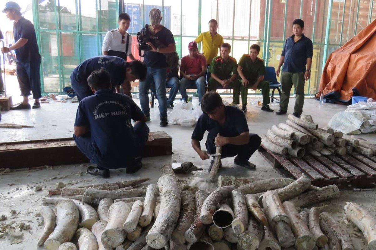 China-bound? Vietnam seizes third illegal ivory shipment in