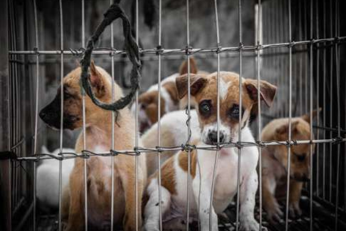 Why Facebook needs to stop feeding us animal-cruelty videos