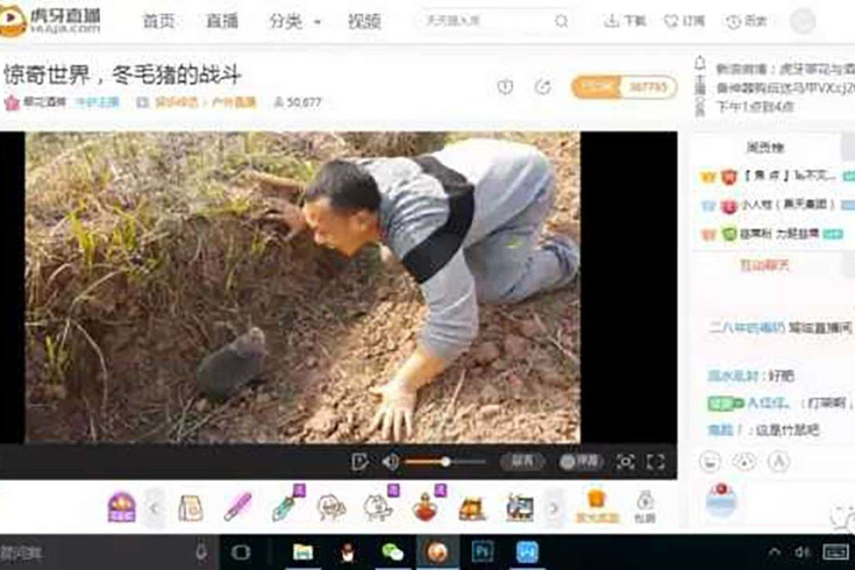 A screen shot of one of the animal abuse online channels showing a man tormenting a bamboo rat. Photo: Handout