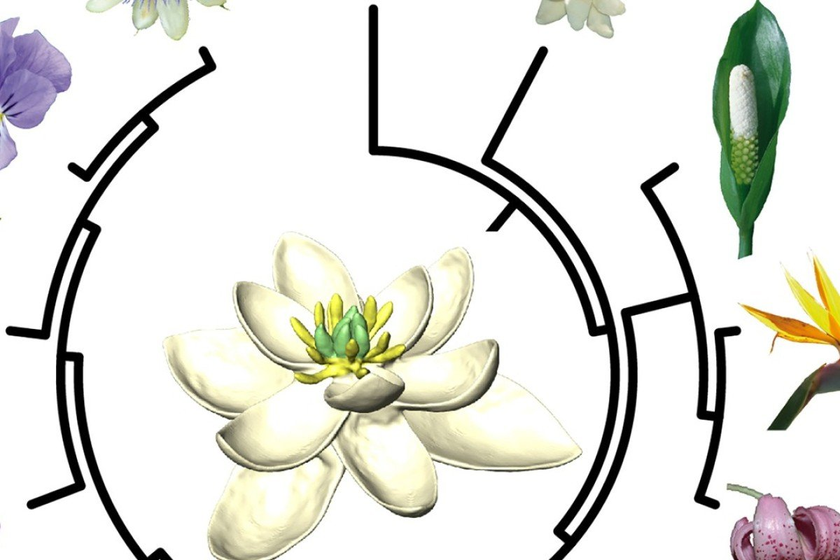 Black And White Flower png download - 800*800 - Free Transparent Family Tree  png Download. - CleanPNG / KissPNG