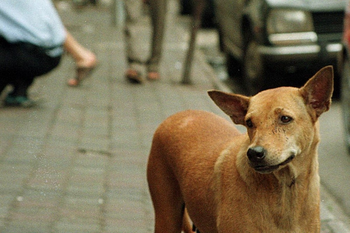 How Malaysia's dogs became political animals