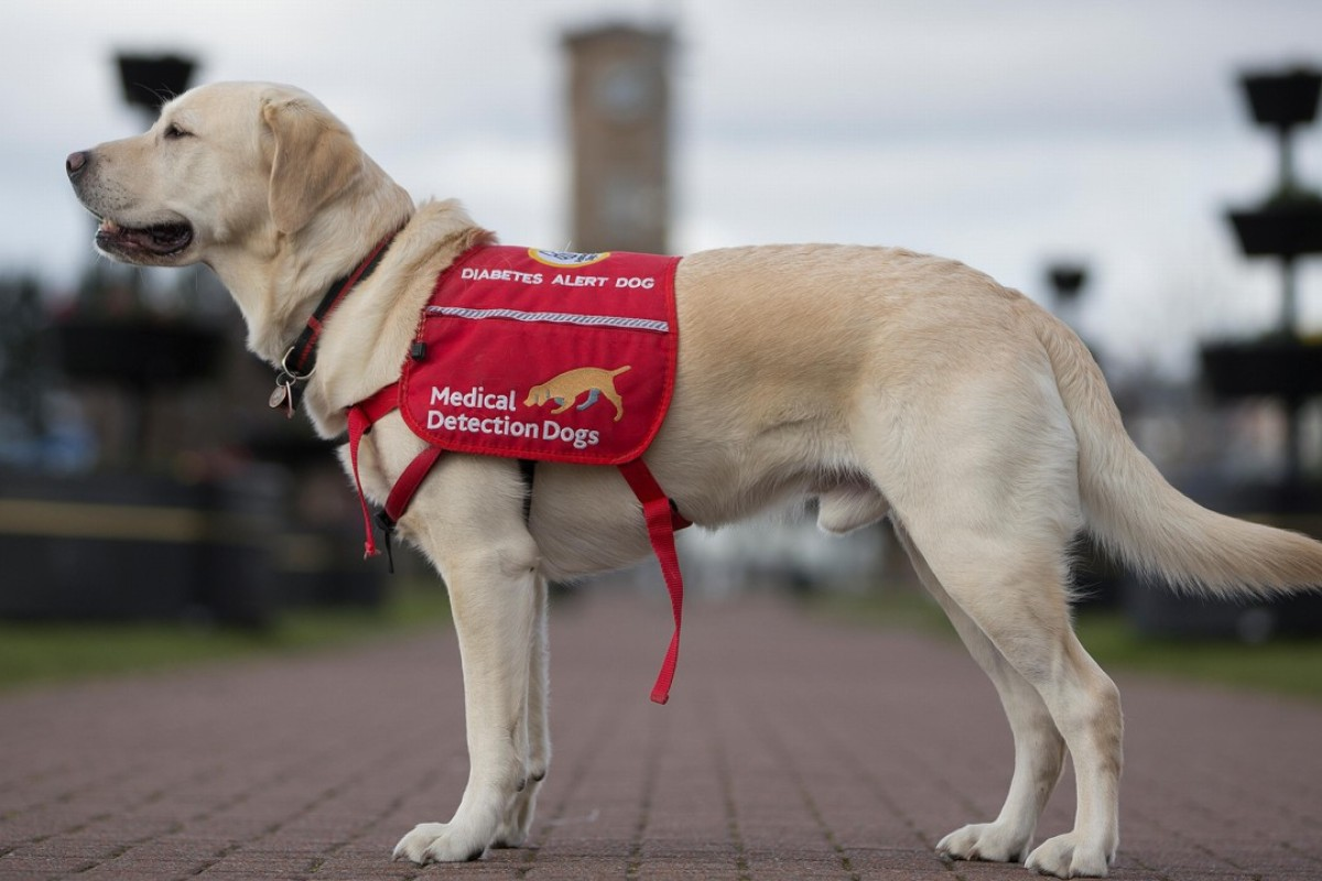 Cancer screening trial using sniffer dogs needs more funds