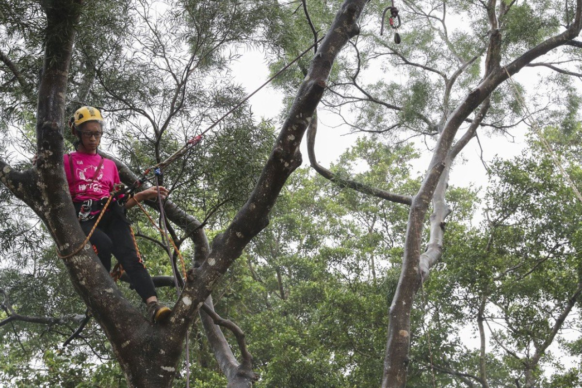 Tree-climbing event gives Hong Kong arborists rare