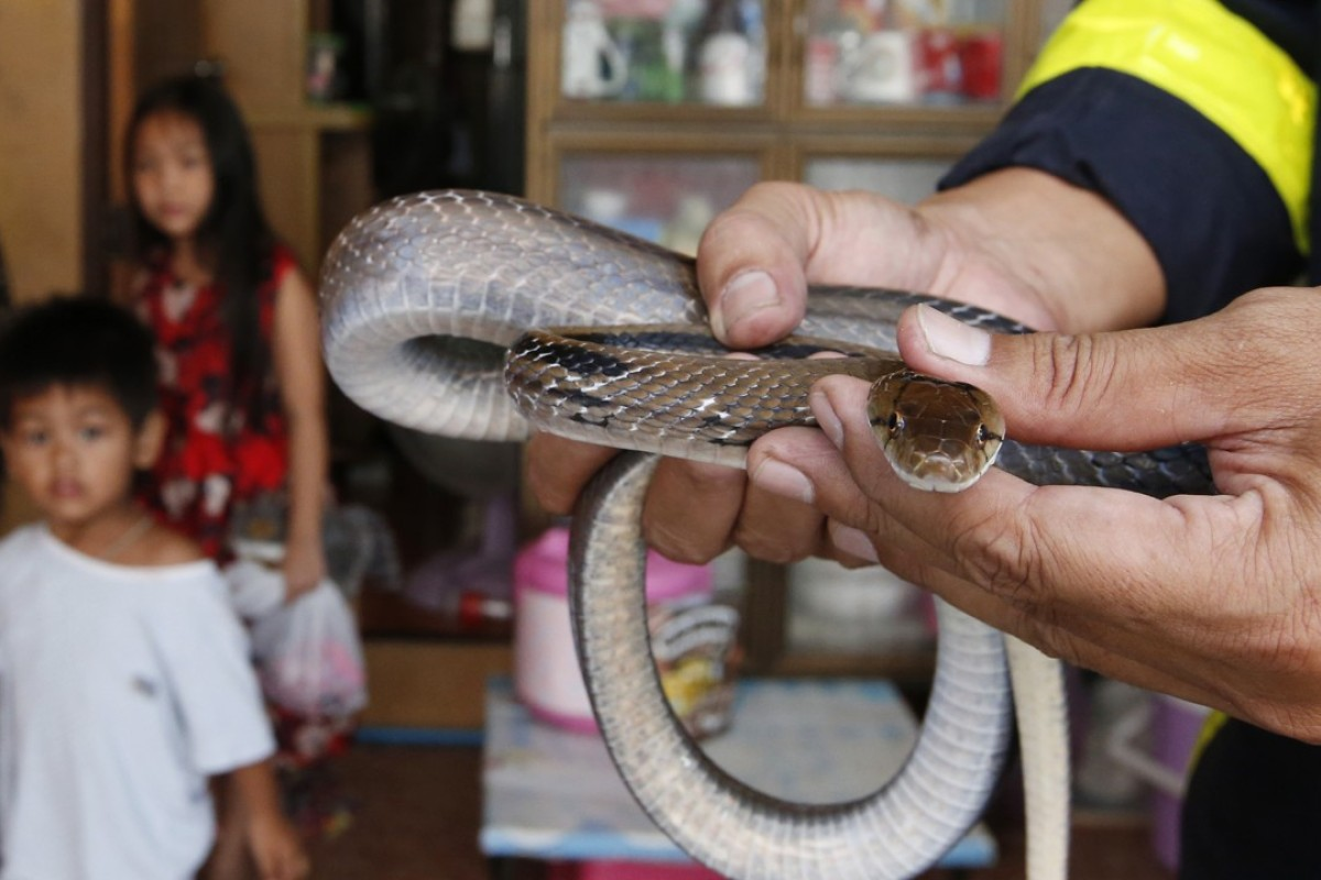 Bangkok firefighters catch more snakes than put out fires