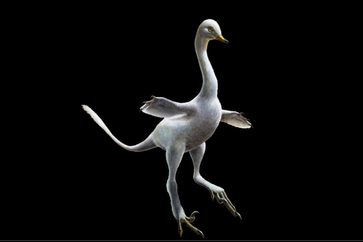 Cock facing left