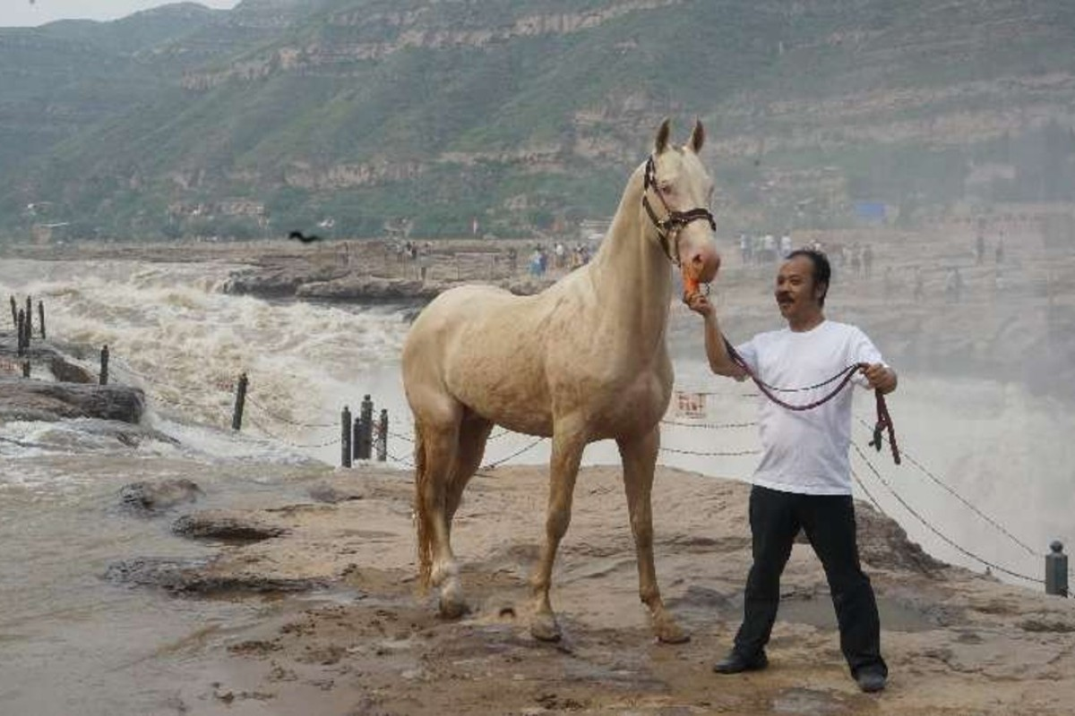 What An Ancient Horse Breed Tells Us About The Chinese Dream South China Morning Post