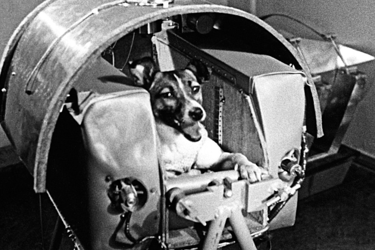 The first animals in space: Russian dogs, French cats and US