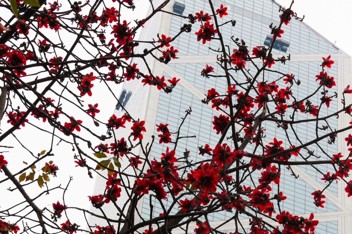 Trees of Hong Kong and their flowers: spring blossoms and