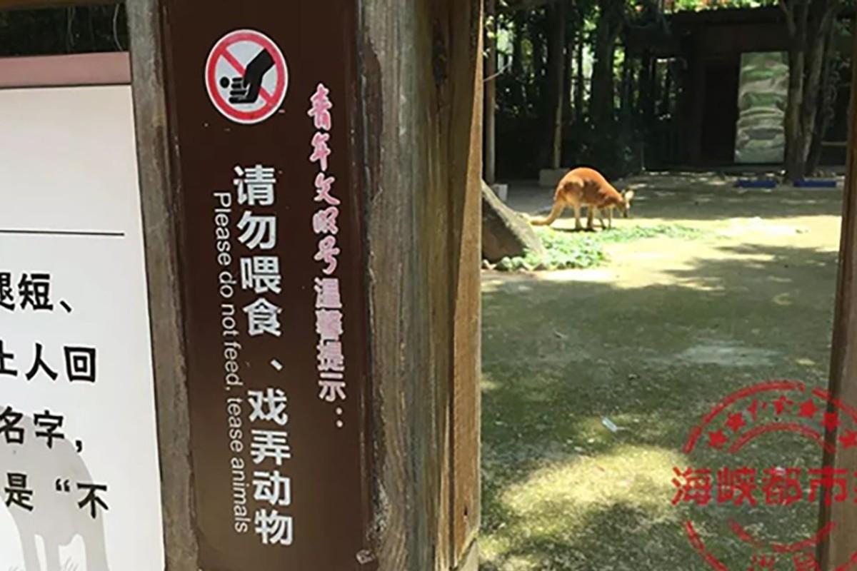 Chinese tourists kill kangaroo, hurling bricks to make it