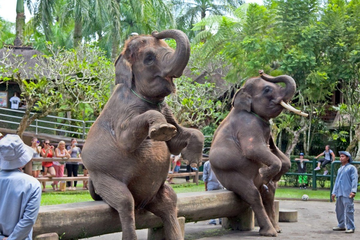 Indonesia's animal attractions slammed, and why you should
