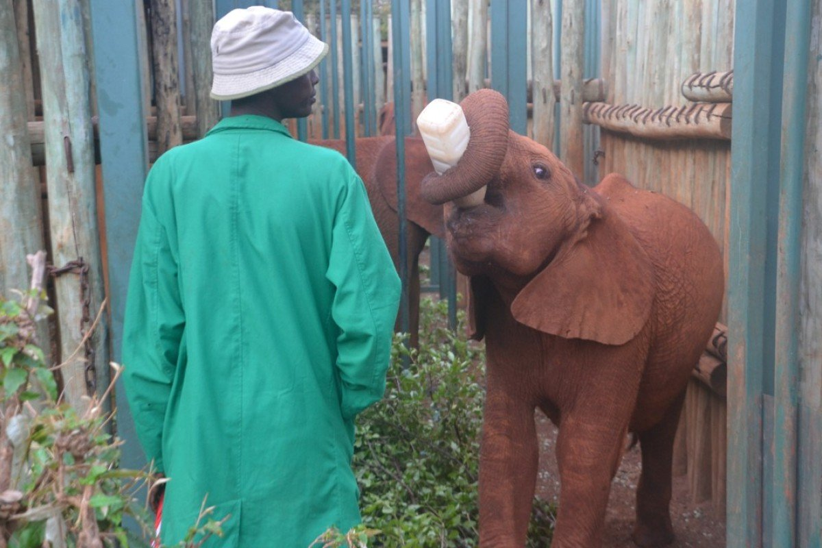 East African elephants: a highlight for tourists, a
