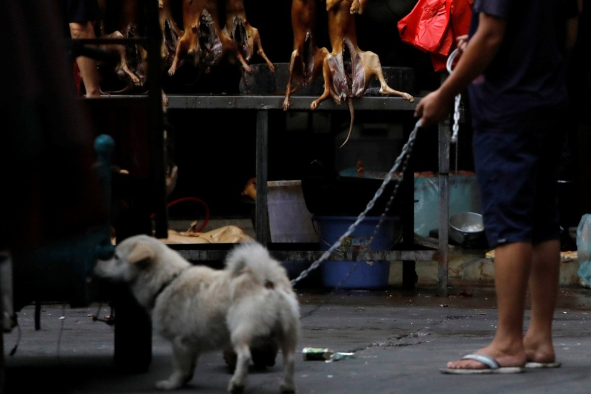 Yulin residents defend China's dog meat festival amid outcry