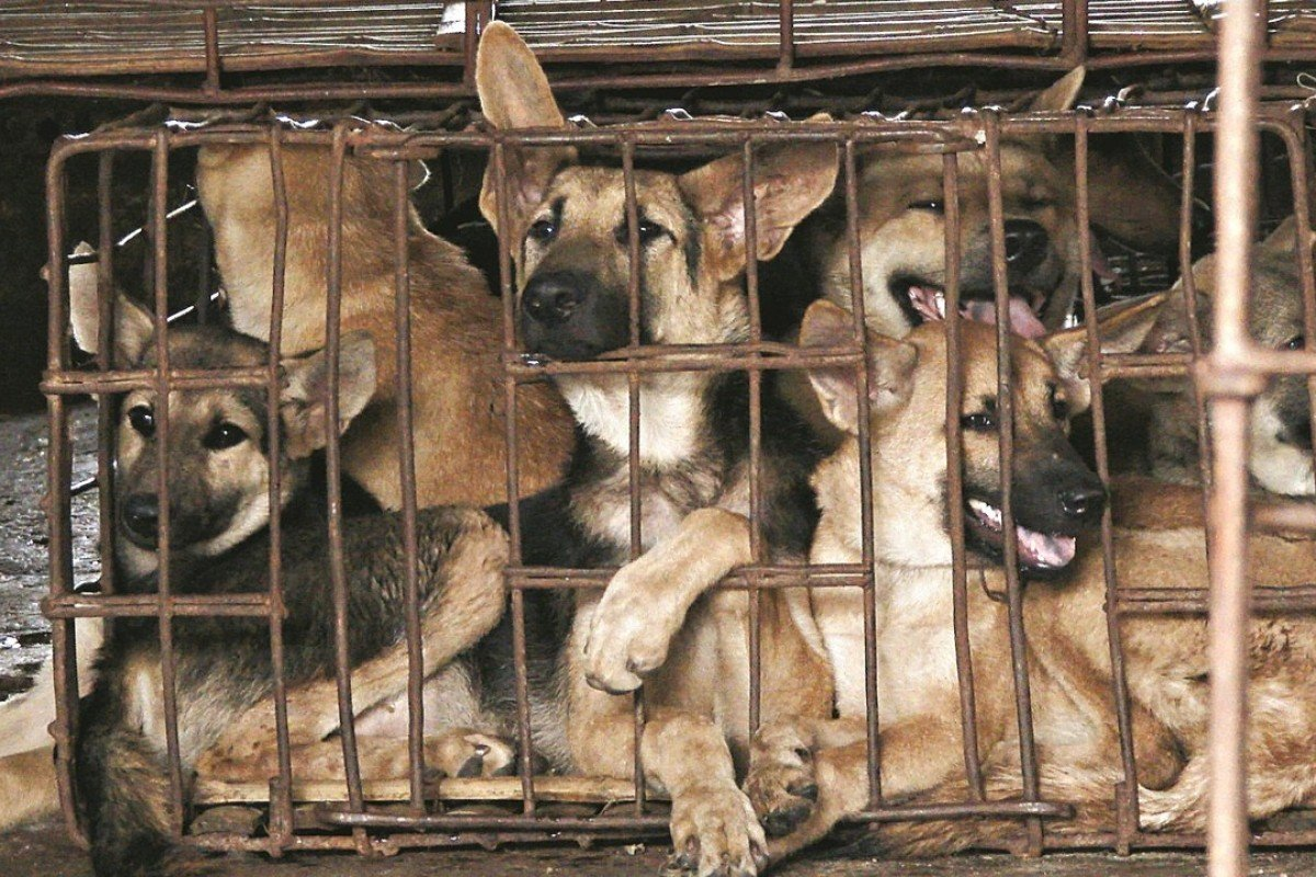 Asia's booming dog meat business and the activists seeking to end a