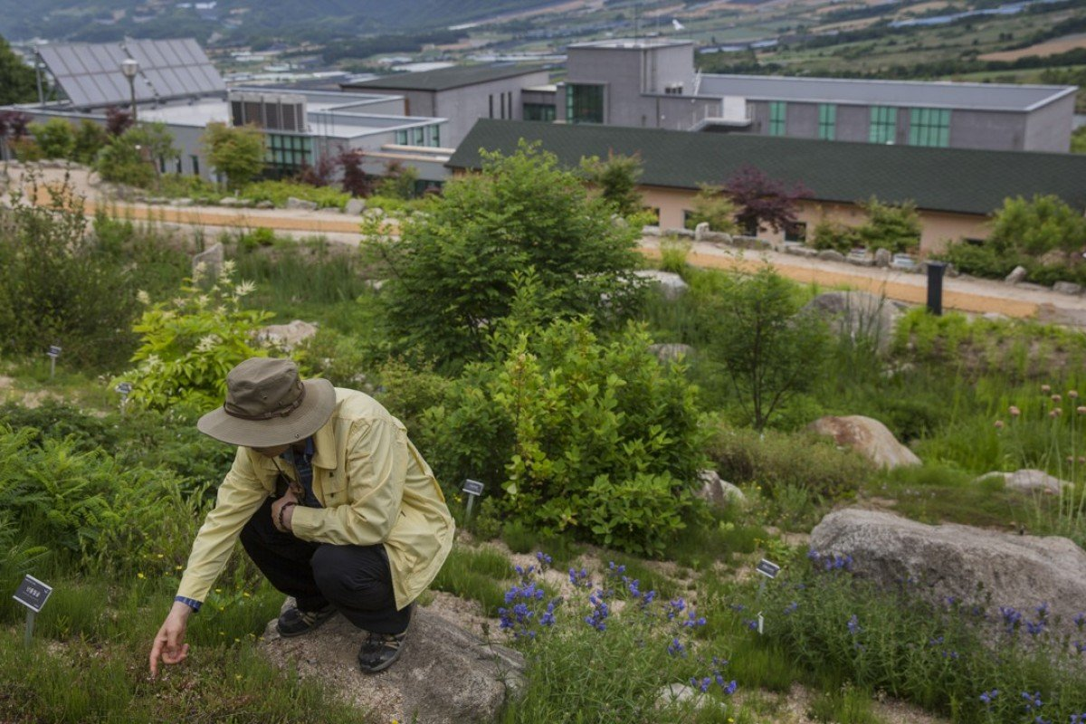 North Korea's ravaged forests and the South Koreans ready to replant