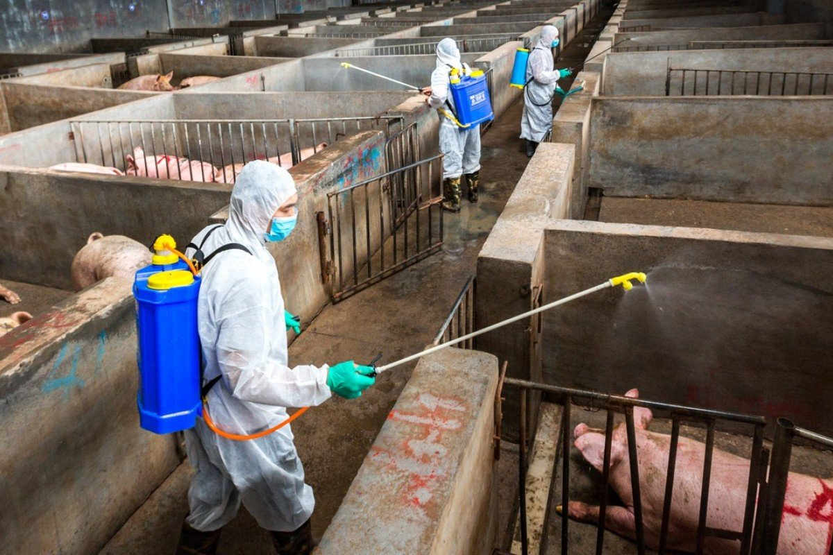 Suspected African swine fever outbreak at farm linked to