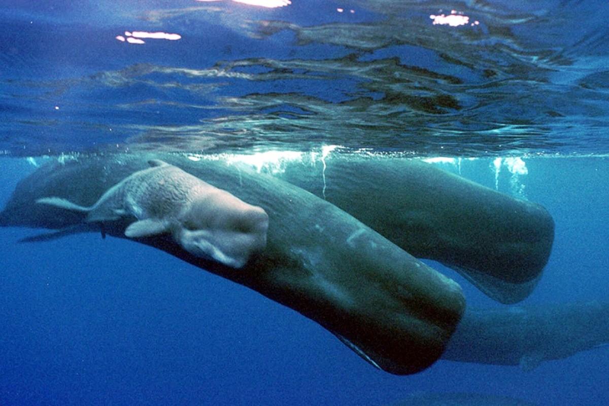 Whale sperm volume brilliant