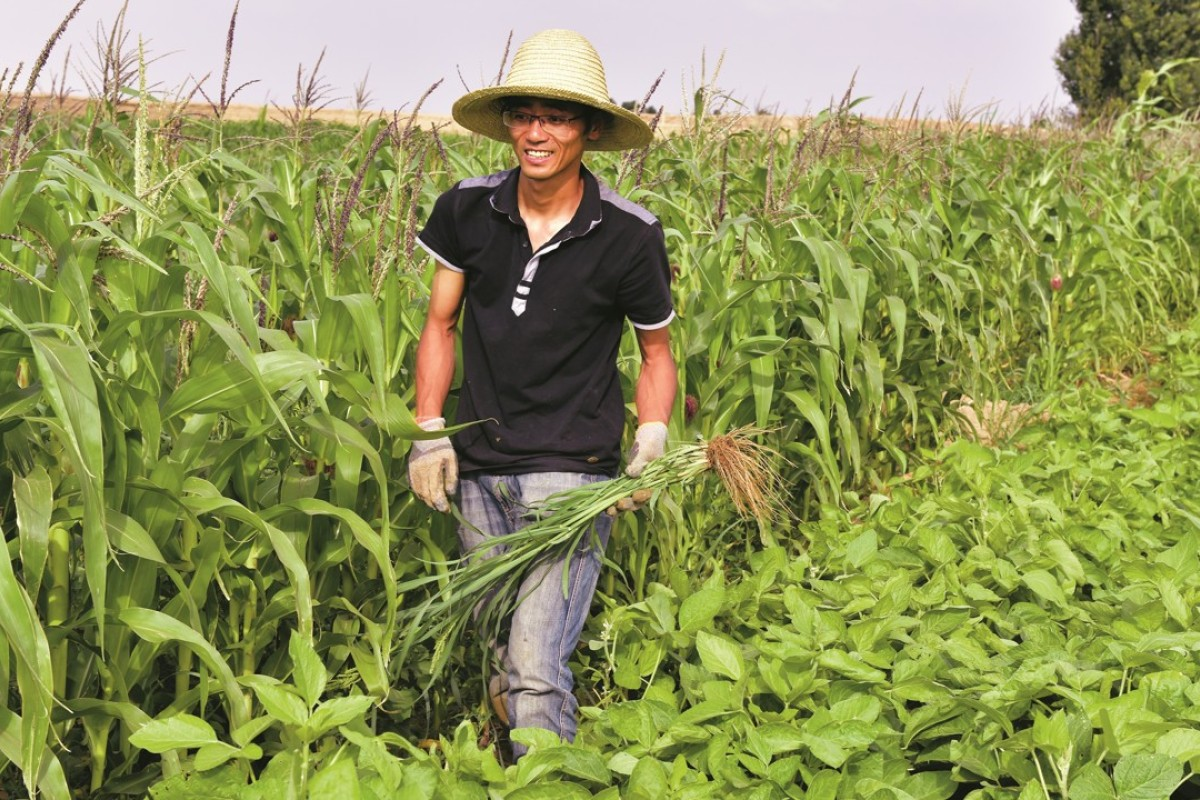 Chinese PhDs and MBAs give up city life for farming, driven by