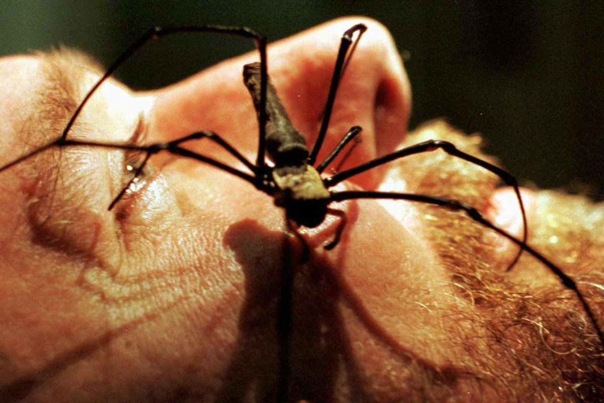 Why don't you die?': Australian man tries to kill spider