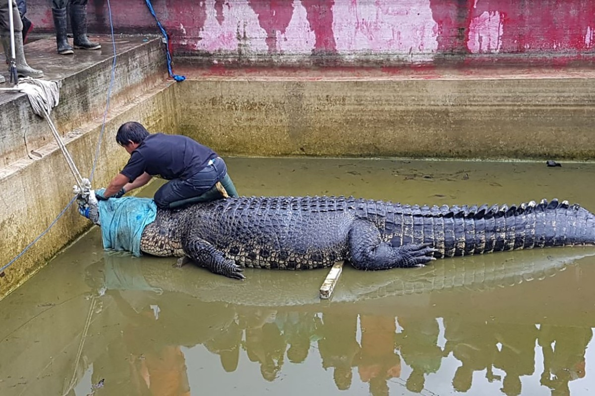 Indonesian woman eaten by 14-foot pet crocodile named 'Merry' after