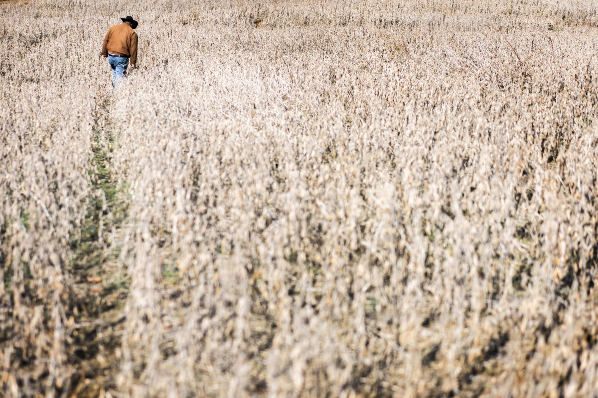 China says it will buy more soybeans, but American farmers