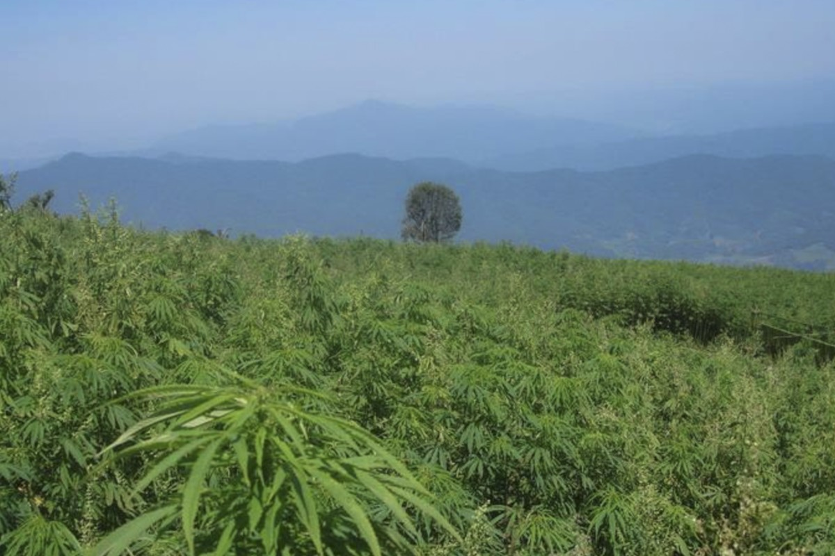 Hemp-related stocks surge after third Chinese province