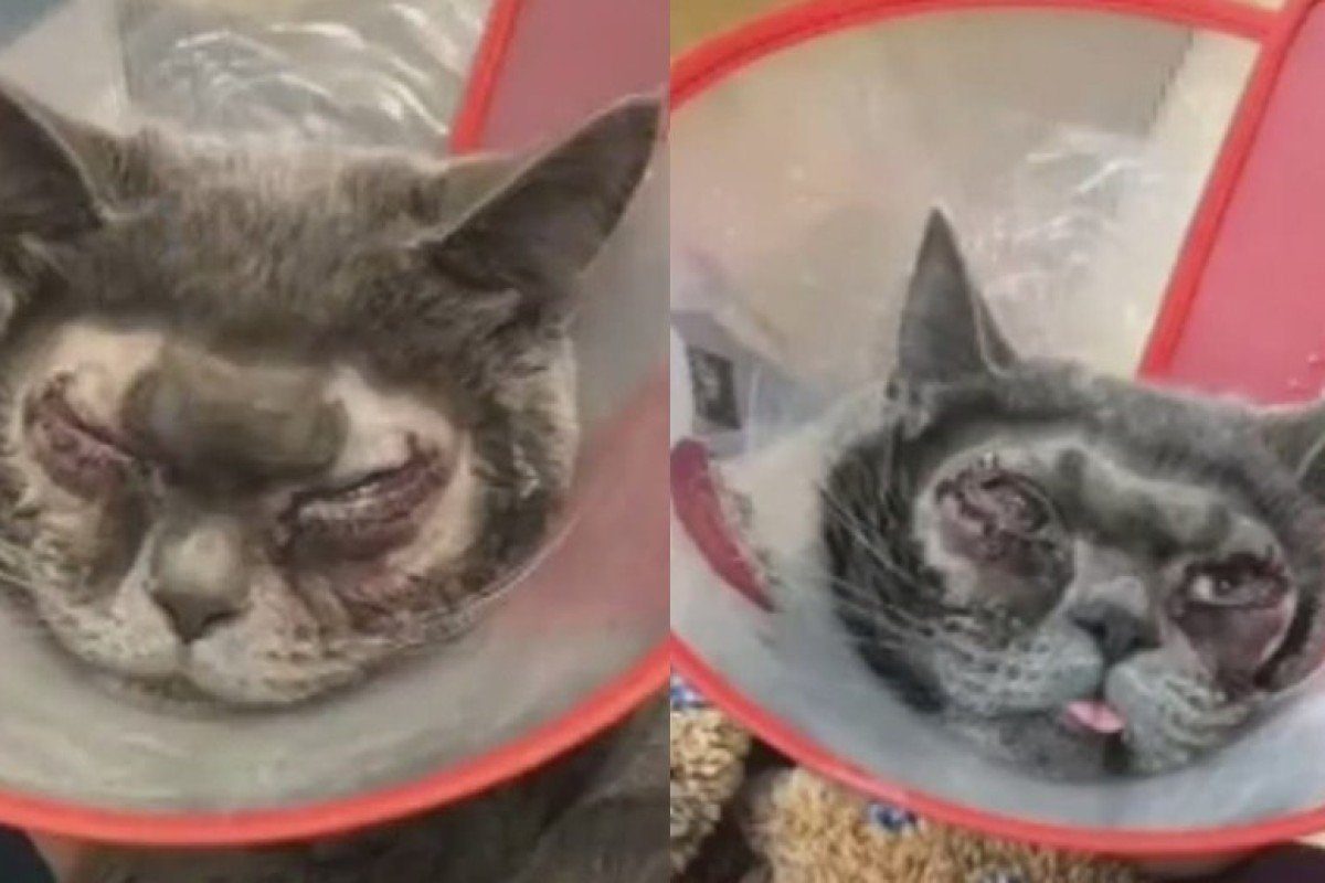 Media madness: Chinese vet decries 'nonsense' story of cat's