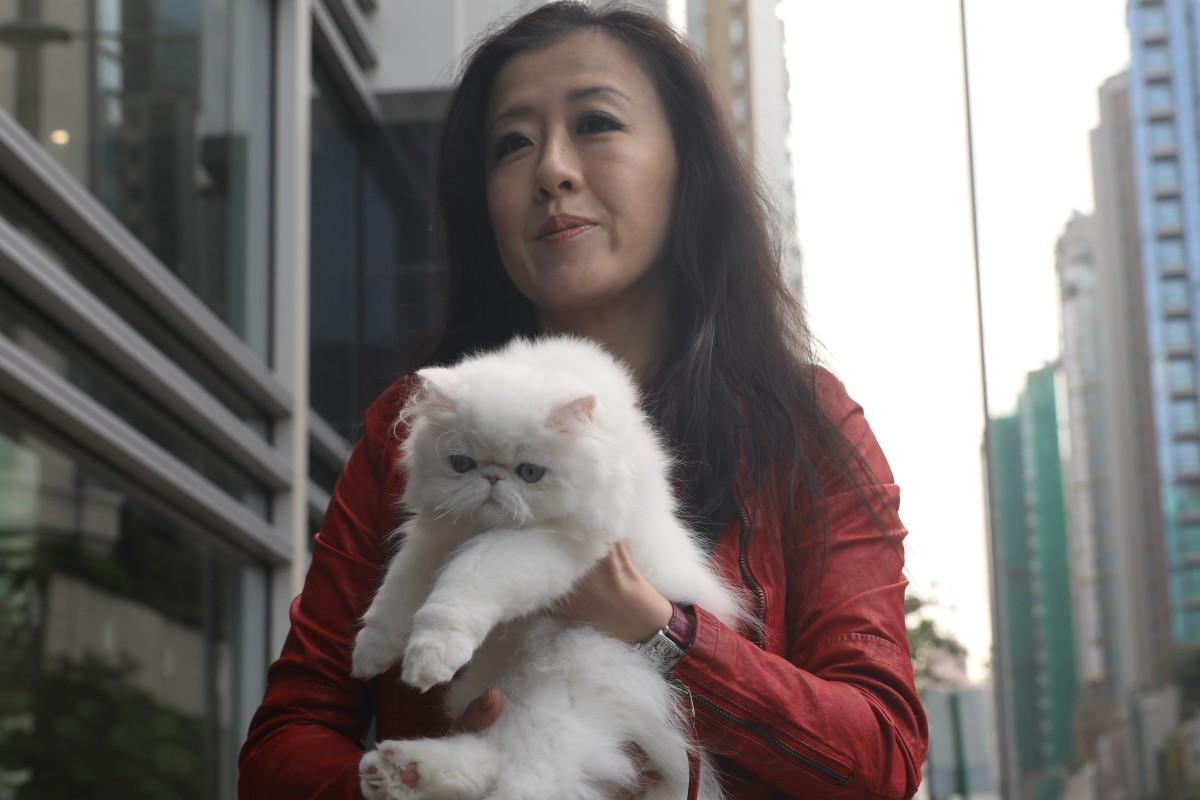 Taiwanese cat breeder who says her Persian kittens were