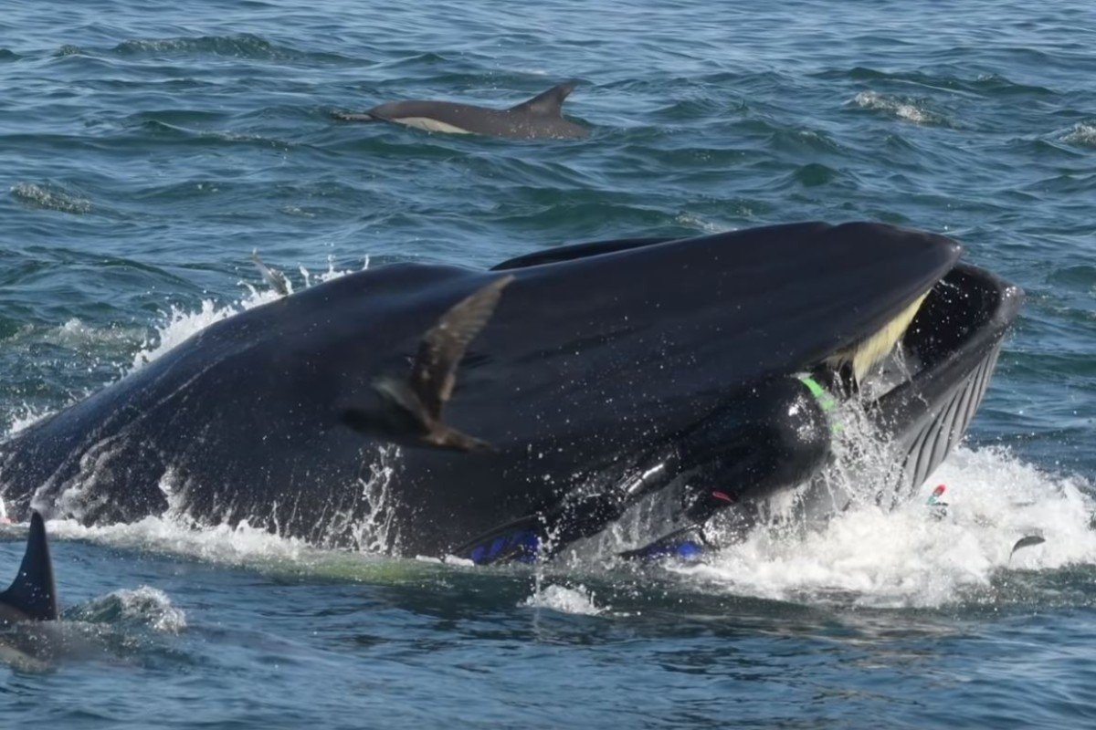 Whale nearly swallows South African conservationist Rainer Schimpf