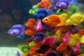 Fish can be pleasing pets, but they need constant care. Photo: AFP