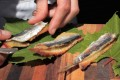 Captain Mauro uses sardines marinated in vinegar and onions to make his nautical dish. Photo: Andrea Oschetti