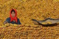 A drought in the United States has pushed up corn prices in China, adding to the risk of inflation. Photo: Reuters