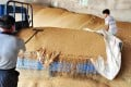 Farmers store wheat after harvesting in Zouping, Shandong province. Photo: AFP